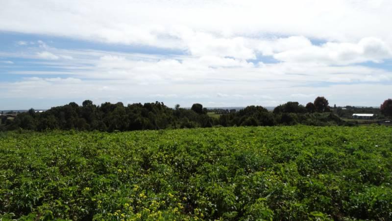 BELLA PARCELA DE AGRADO'', SECTOR HUEICO, RILÁN- CASTRO