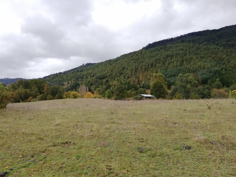 Terreno 2,365 hectáreas, sector el papal, Pucón