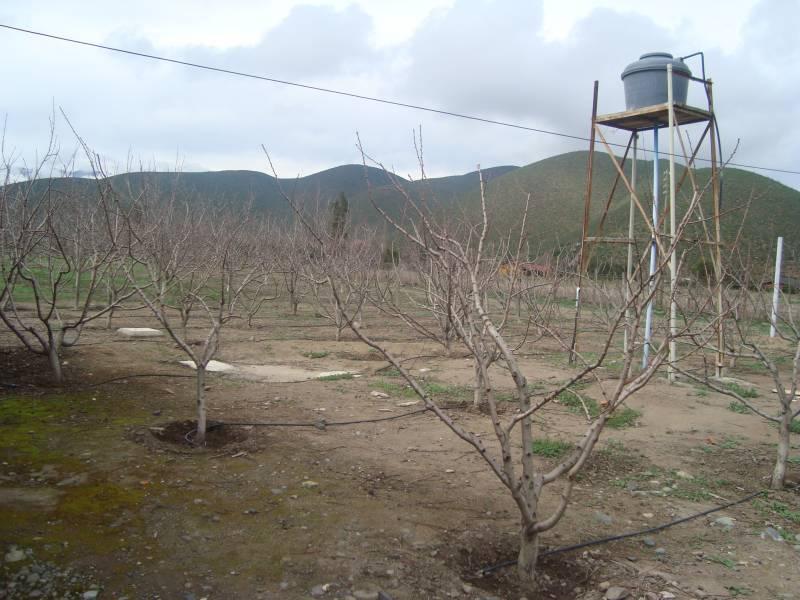 TERRENO AGRICOLA CON PLANTACION DE NOGALES , Y TRANQUE