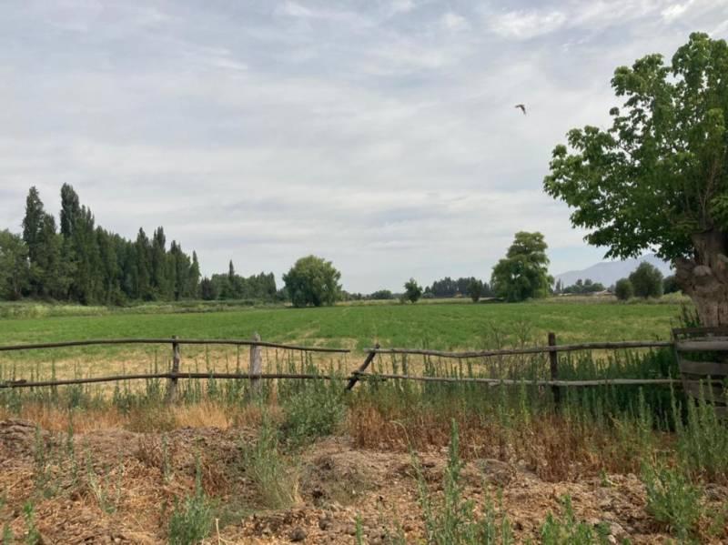 Parcela agrícola de 6,9 hectáreas en Colonia Kennedy