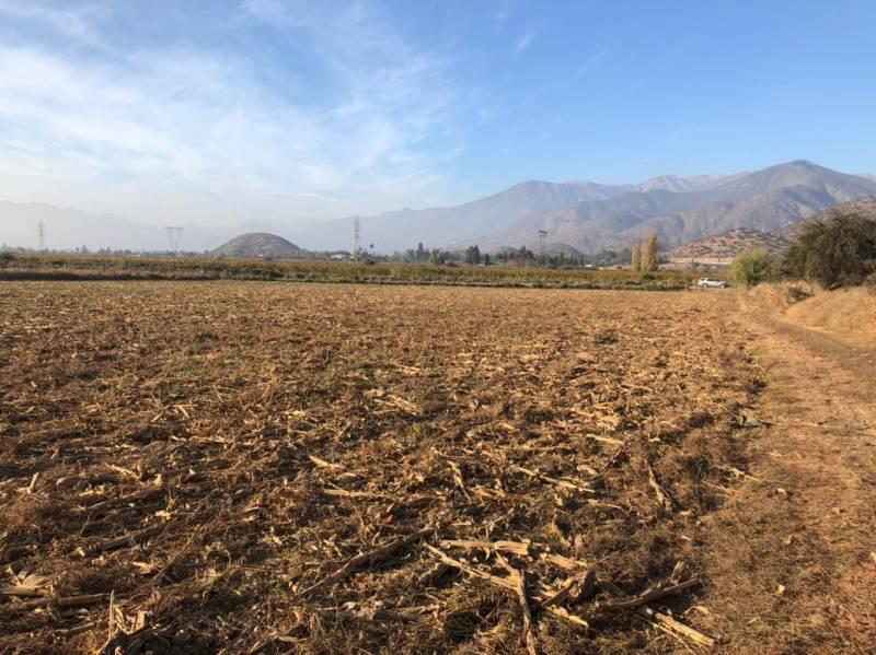 Parcela de 4 hectáreas agrícola en Chada