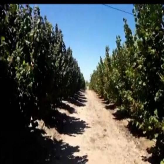 PARCELA CON PLANTACIONES 93 HECTÁREAS $4.650.000.000 LONGAVÍ