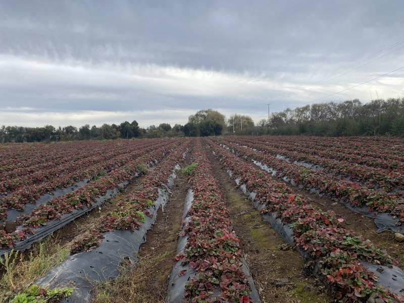 Gran Terreno agrícola sin Comisión! En Chillan!