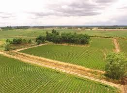 47 Fértiles hectáreas de terreno con frambuesas orgánicas