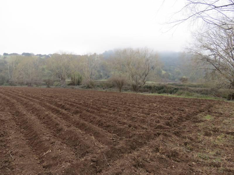 PARCELA AGRICOLA  0,89 HÁ  CON CABAÑA