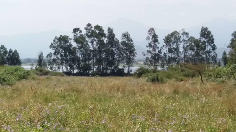 Hermoso campo a orillas del embalse Convento Viejo