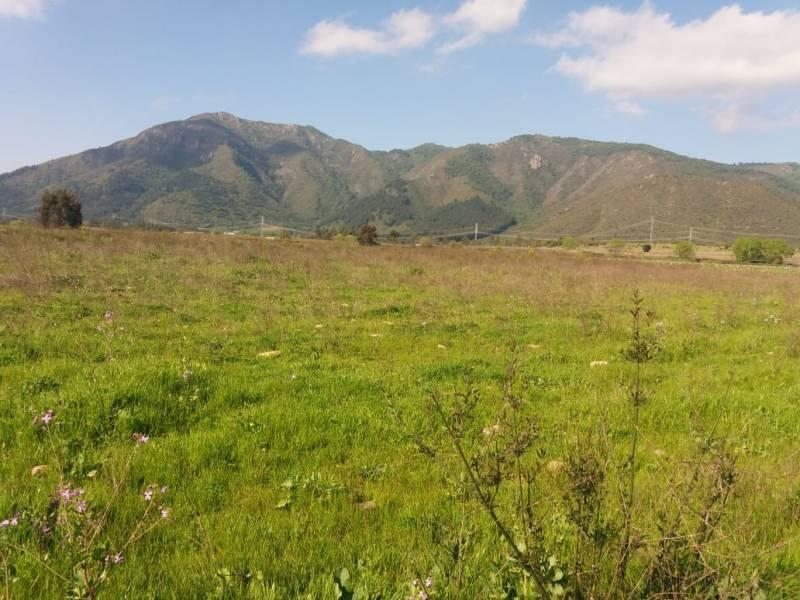 PARCELA AGRICOLA de 5000 mts SECTOR LA VALDESINA