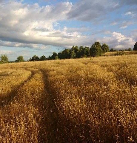 Excelente campo agrícola y ganadero