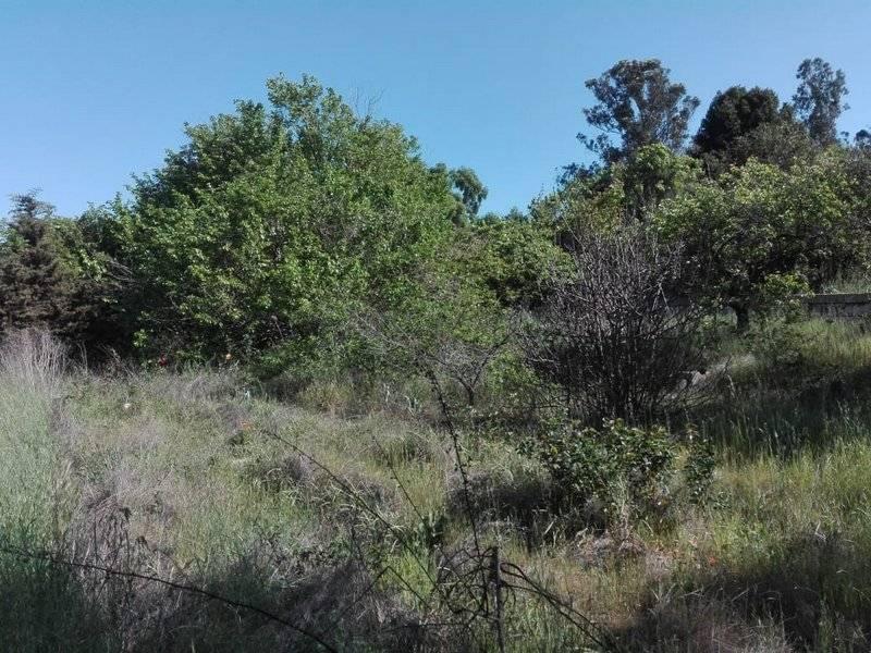 (175 V) Quilpué, Terreno Paso Hondo