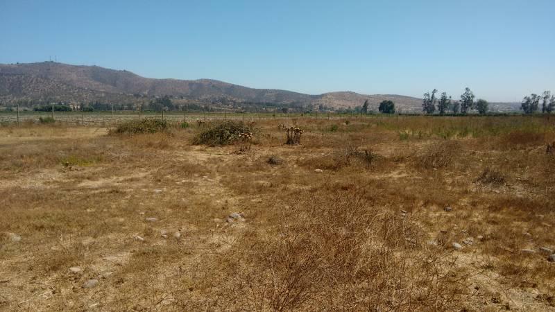TERRENO AGRICOLA DE 5.000 MT2,CAMINO MANZANAR CAROLMO