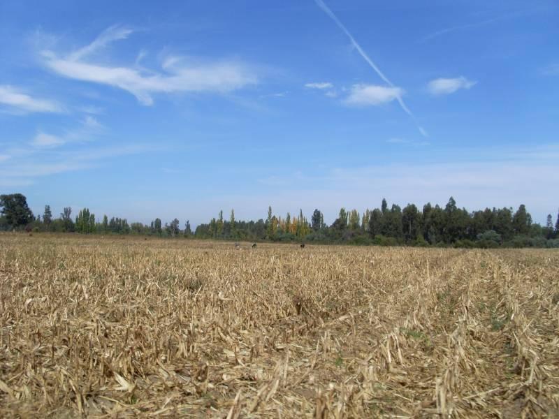 Fundo de 114 hectáreas, sector putagán, linares