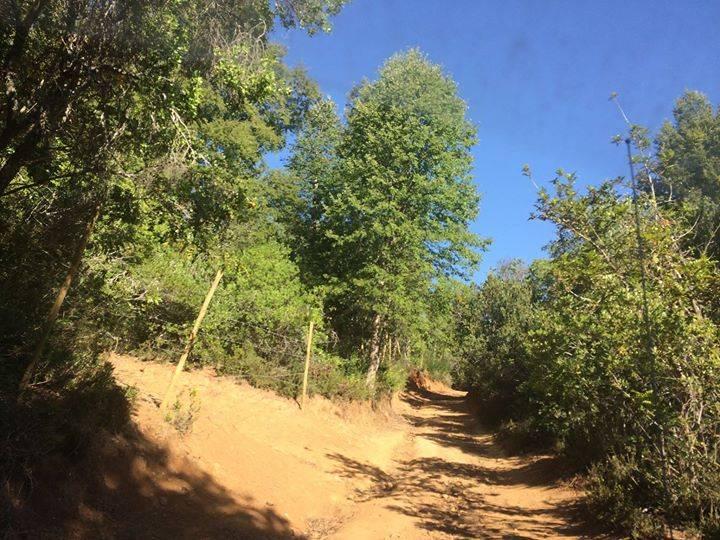 ÚLTIMOS 2 TERRENOS 5.000 MT2 LINARES, CAJÓN DE PEJERREY
