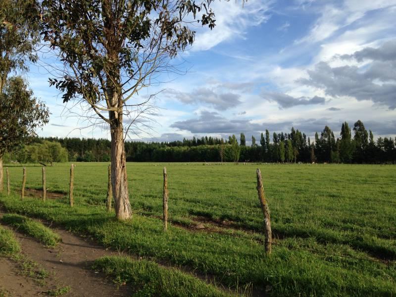 se vende campo de 75 hectareas con terreno agricola ganadero