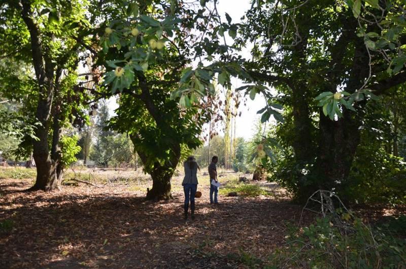 Loteo camino Santa Barbara Los Angeles - Jofré y Rossi -