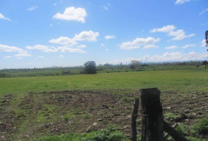 13, 07 hectareas aptas para todo cultivo, tomates, frutales,
