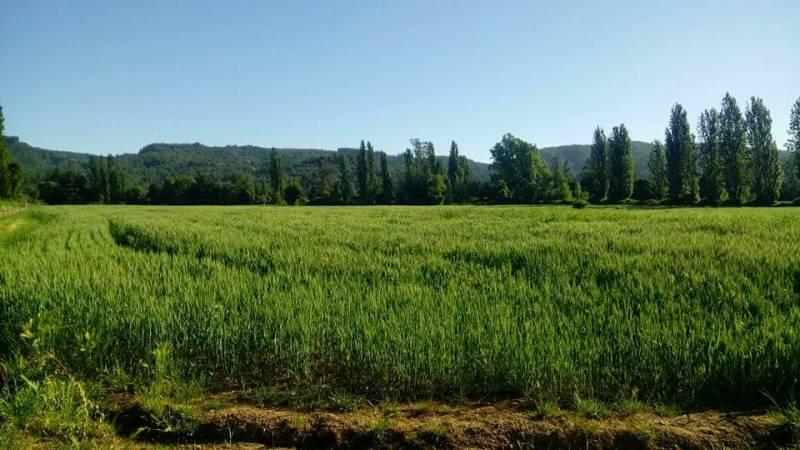 Se venden lotes de 5000 m2 en la comuna de Linares