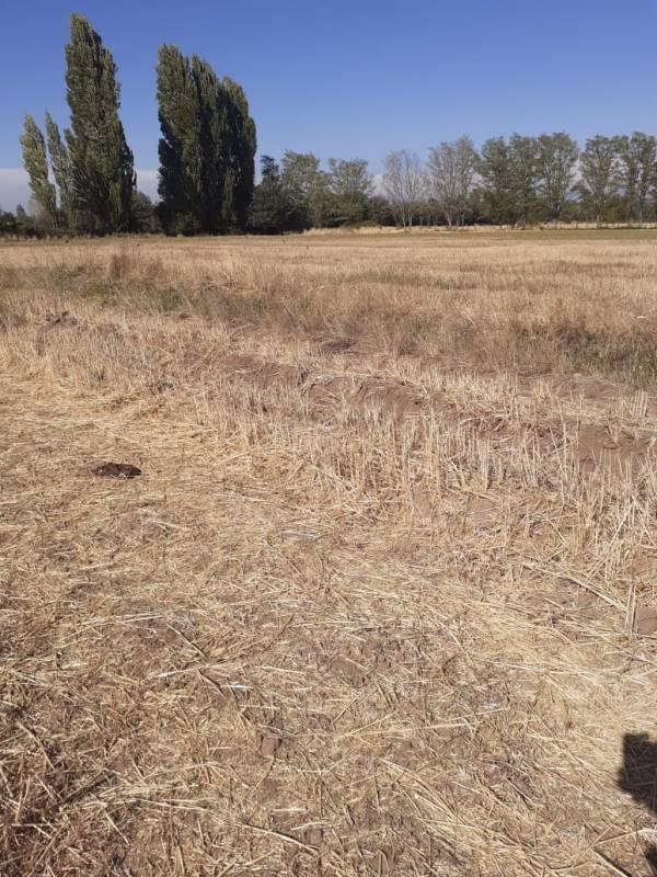 Se vende 9,5 hectáreas en la comuna de Ñiquen. BIO BIO.
