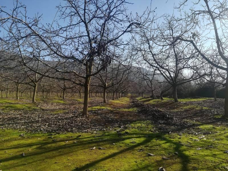 Vendo 14 hectáreas en malloa sector corcolen
