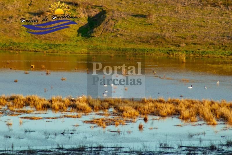 PARCELAS EN BUCALEMU | VENTA 5000M2 A 7 MIN  DE LA PLAYA VI