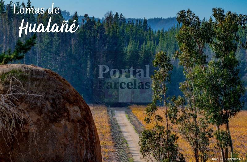 HUALAÑÉ | VENTA DE PARCELA CAMINO A LAGUNA TORCA VII REGIÓN