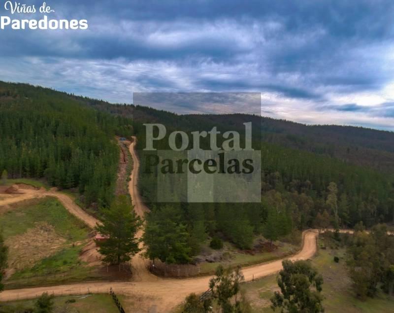 VIÑAS DE PAREDONES | VENDO PARCELAS EN SEXTA REGIÓN CHILE