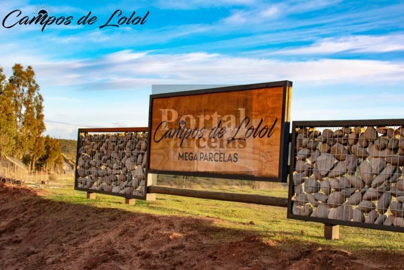 CAMPOS DE LOLOL | VENTA DE PARCELAS EN SEXTA REGIÓN DE CHILE