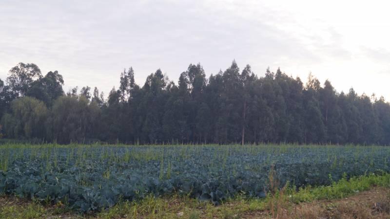 12,9 HECTAREAS AGRICOLAS EN LINARES