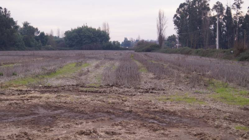 10 HECTAREAS AGRICOLAS EN LONGAVI