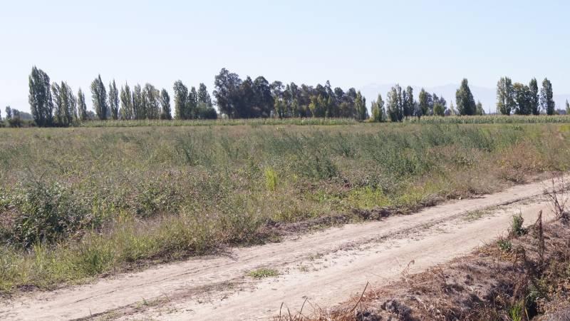 1,03 hectáreas en sector Palmilla a pocos minutos de Linares