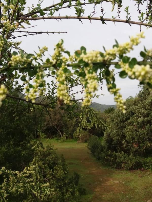 PARCELA AGRADO 2 HECTÁREAS TANTEHUE ALTO, MELIPILLA