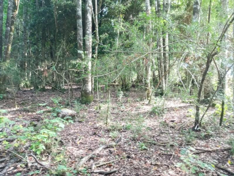 campo cultivabable + bosque nativo Alhue Reg. de Los Rios
