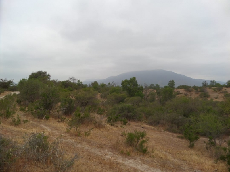 Venta Parcelas Camino Rapel km15 Culipran