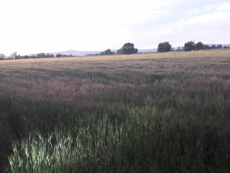 7ma region, 35 hectáreas terreno plano con derechos de agua