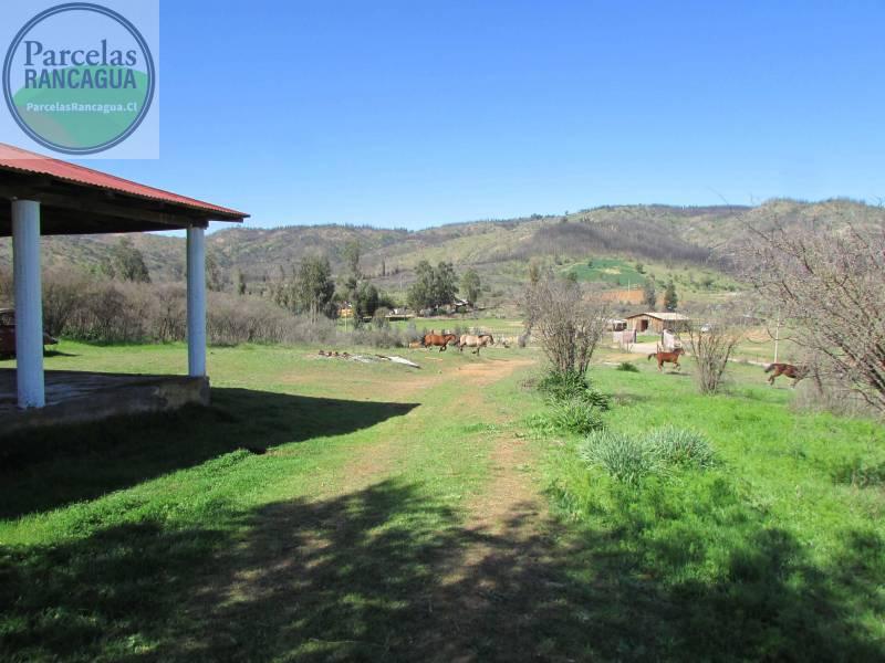 En Venta Parcelas 5000m2 en Hualañé - Curicó