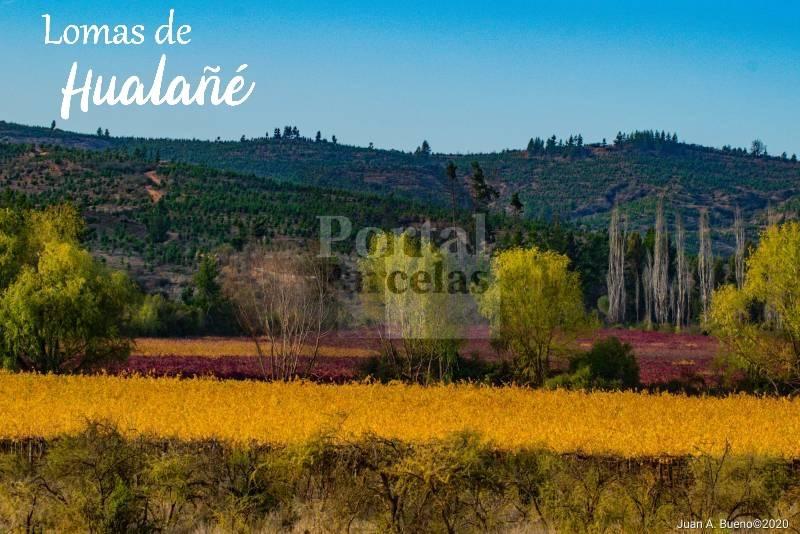Hualañé | Venta de Parcelas Camino a Laguna Torca y Llico