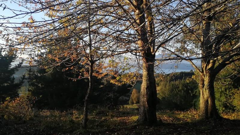 Lago Ranco, Ilihue Bajo. 8.000 m2 Vista al lago