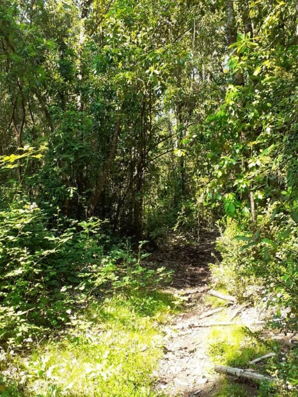 Venta terreno bosque nativo en La Unión, región de Los Rios