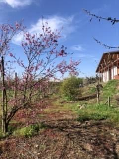 Parcela con casa y plantación de cerezos
