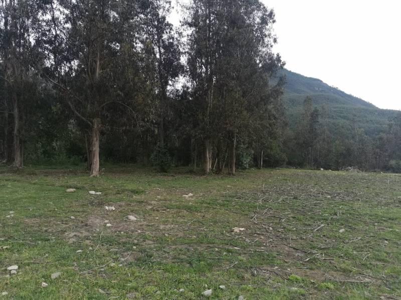 PARCELA DE AGRADO DE 6.000.-MTS2 , CON ACCESO A RÍO ANCOA