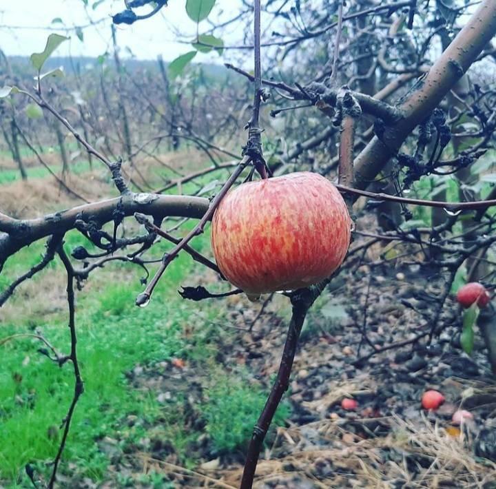 Campo con producción de peras y manzanas