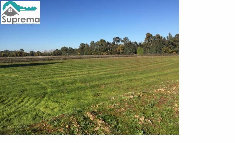 Parcela de 2 hectáreas sector El Emboque