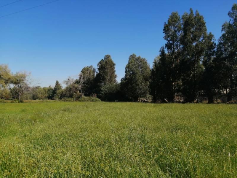Hermosa parcela 4 hectáreas
