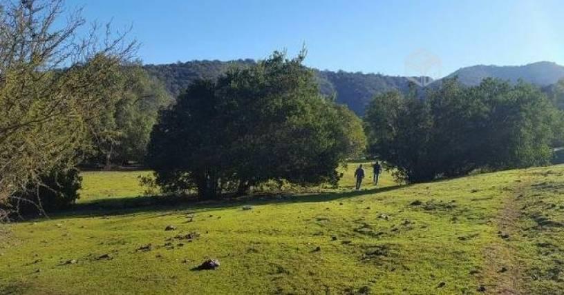 Loteos brujos en Melipilla ponen en peligro uno de los puntos más importantes para la biodiversidad del planeta