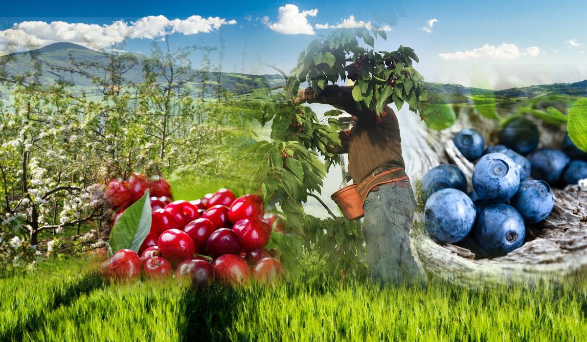 Subcontratación para Faenas Agricolas y Agroindustriales