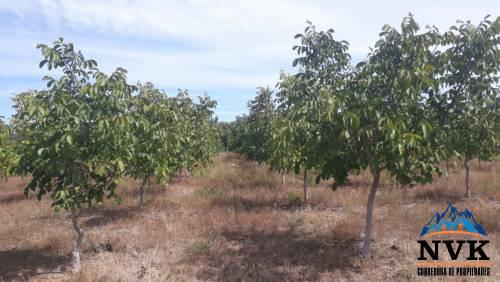 Se venden 13,85 hectareas a 6 km. de Bulnes
