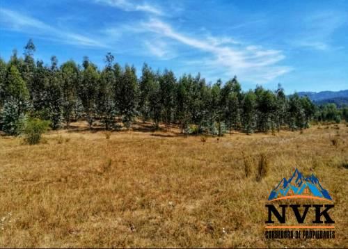 Terreno de 12,07 has. con plantación de eucaliptus en venta