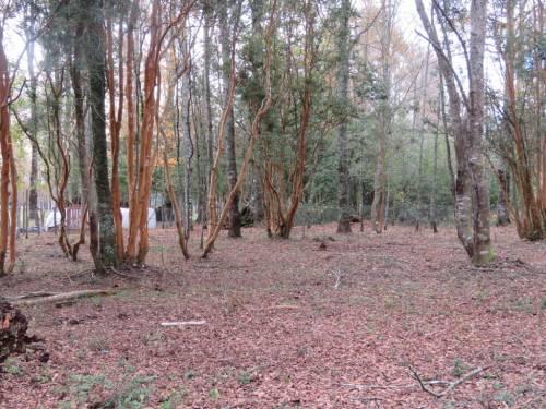 Hermosa parcela de 5.000 mts2 Sector Molco Alto Villarrica