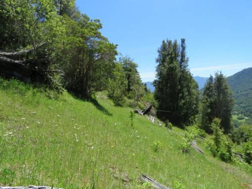 Terreno de 9,5 HA, sector Coilaco, Pucón