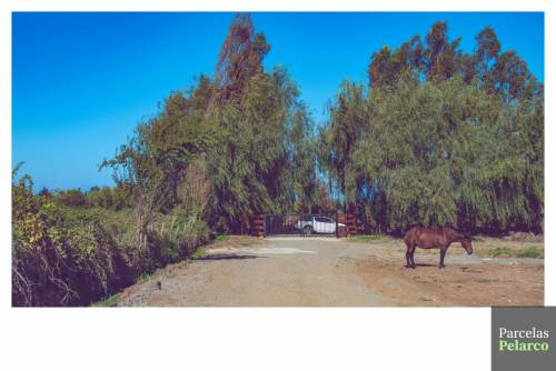 Talca | Venta de Parcelas 5000m2 Camino a Pelarco